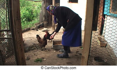the woman feeds chicken from hands and talks to it