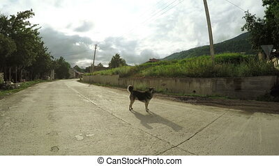 Dog on street - On road to Svan village in Georgia runs dog