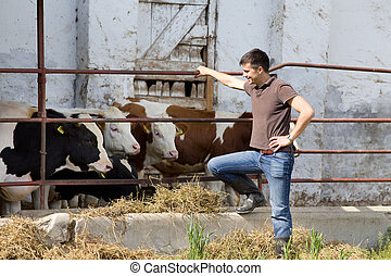 Farmer with young cattle - Happy farmer standing beside...