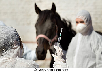 Horse vaccination - Veterinarians with masks giving vaccine...