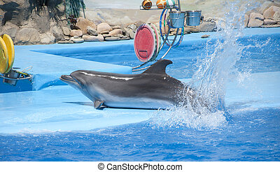 Playful dolphin at dolphinarium show