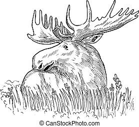 drawing illustration of a moose - hand sketched drawing...
