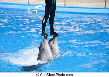 Dolphinarium show. Trainer on two dolphins