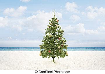 x-mas tree - view of Christmas tree on wild empty tropical...