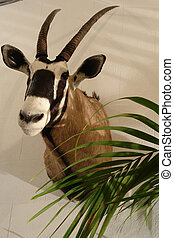 Stuffed animal of an antelope
