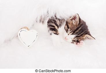 kitten relax
