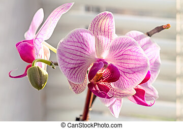 Orchid flowers on the window with shutters