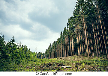 Swathe through the forest - A swathe through a coniferous...