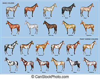 Horse color chart - Chart of the 22 main horse coat colors