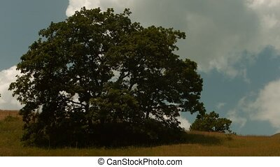 Big Tree in the Countryside. A great piece of stock in 4k...