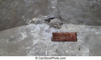 Bird Nesting on the Side of a Wall