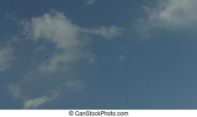 Birds Flying with Soft Clouds