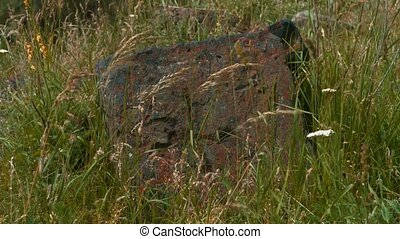 Old Stone Carving Surrounded by Grass A great piece of stock...