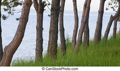 Ocean Through the Trees with Green Grass