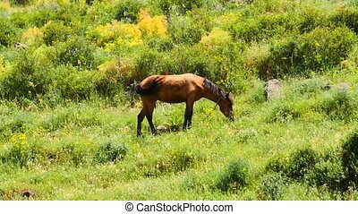 Horse Eating Grass in the Countryside