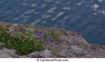 Flowers on a Rocky River Bank