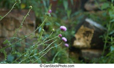 Purple Flowers Blowing in the Wind