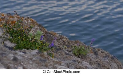 Flowers Growing Out of Rocks on the Side of a River