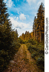The road through the wood - Summer landscape in the...