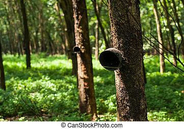 End season of rubber wood - End season of rubber wood...