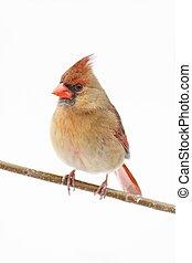 Isolated Bird On A Stump