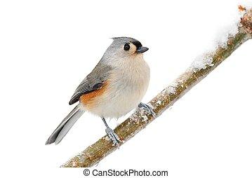 fehér, madár, elszigetelt