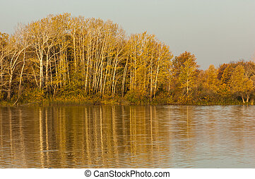 Autumn mixed forest reflected in th