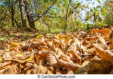 Autumn deciduous forest, sunny day