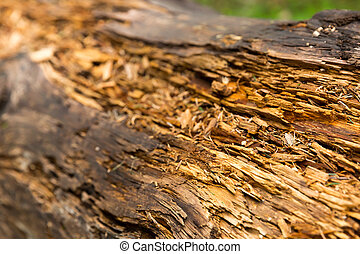 Old rotten wood - Macro view of old rotten wood