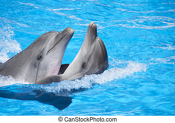 Two dancing dolphins at pool
