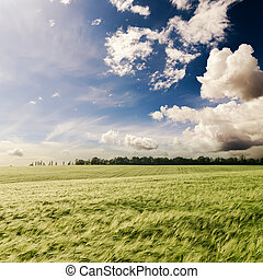 dramatic sky over green grass field
