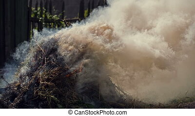 Burn Dry Grass - Ecology polution with smoke of burning...