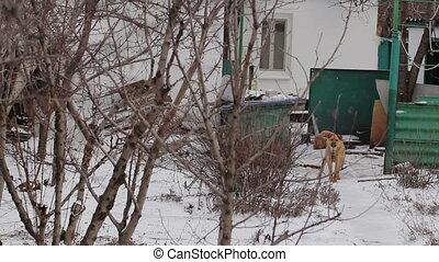 Barking Dog In A Slum - Barking dog from a slum