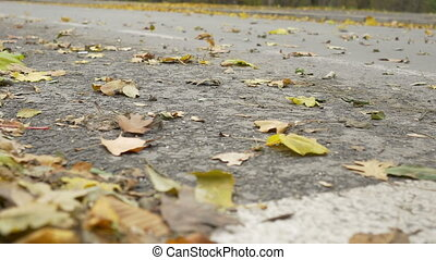 Wind Leaves On Street - Autumn leaves are swept away by a...