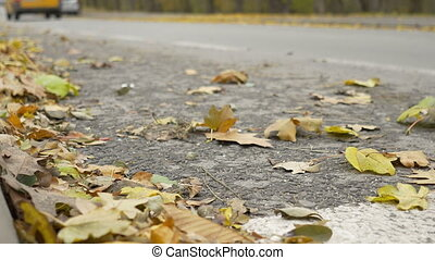 Wind Spreading Leaves on Street