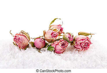 rose snow - a bouquet of roses in the snow