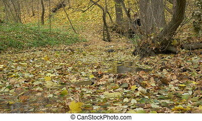Autumn Leaves on Water Stream