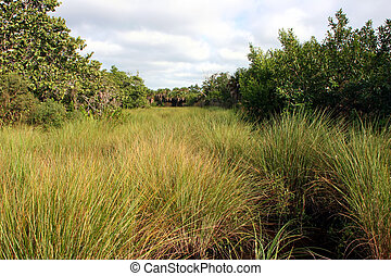 Natural Landscape Sanibel Captiva Conservation Foundation...