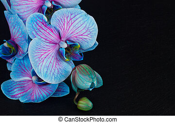 Bunch of violet orchids - Bunch of blue orchids on black...