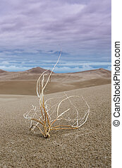 Tumbleweed in Sand Dunes Vertical - Against the light from...