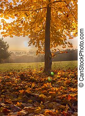 Autumn maple tree in Sunrise - Herbst Ahornbaum im...