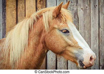 Portrait of the Horse against of the Wooden Background