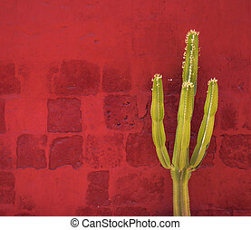Green Cactus over red wall, Santa Catalina Monastery,...