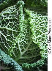 Savoy cabbage super food close up. Top view