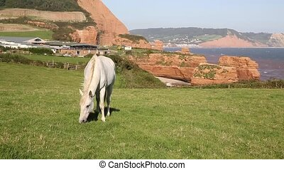 White pony and English coast uk - White pony and sandstone...