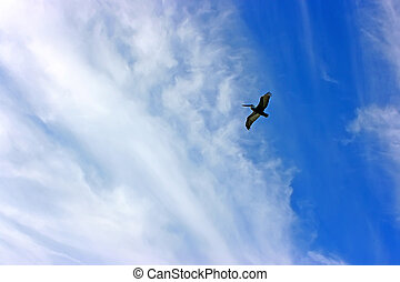 Pelican - Silhouette of pelican in the blue cloudy sky