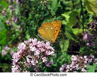 Small red butterfly on flowers