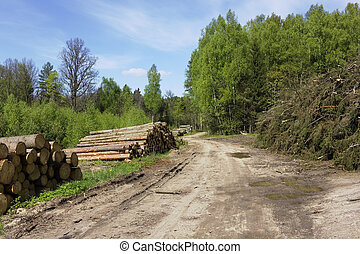 Ruthless deforestation of the pine wood on logging...