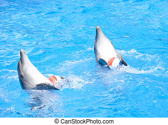 Two dancing dolphins