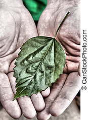Green leaf in hands